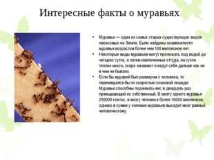 Муравьи — один из самых старых существующих видов насекомых на Земле. Были на