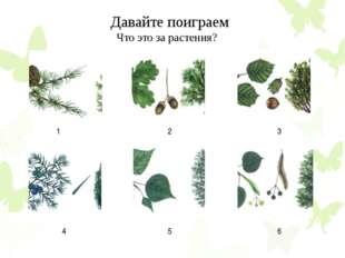 Давайте поиграем Что это за растения? 1 2 3 4 5 6