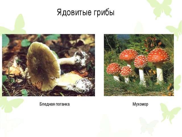 Ядовитые грибы Бледная поганка Мухомор