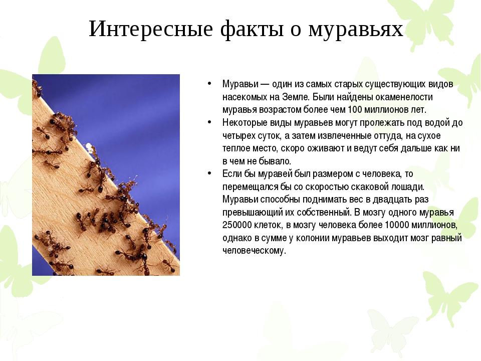 Муравьи — один из самых старых существующих видов насекомых на Земле. Были на...