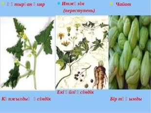 Итжүзім (переступень) Екі үйлі өсімдік Құтырған қияр Көпжылдық өсімдік Чайот