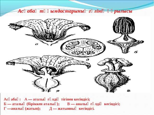Асқабақ тұқымдастарының гүлінің құрылысы Асқабақ: А — аталық гүлдің тігінен к...