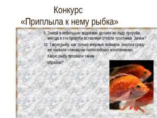 Конкурс «Приплыла к нему рыбка» 9. Зимой в небольших водоемах делают во льду