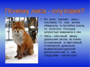 Во всех сказках лиса – плутовка. То она волка обманула, то Колобка съела, то