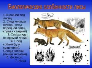 1. Внешний вид лисиц. 2. След лисицы (слева - след передней лапы, справа - за