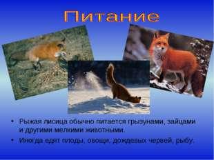 Рыжая лисица обычно питается грызунами, зайцами и другими мелкими животными.