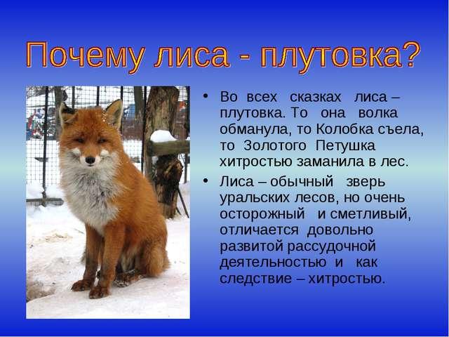 Во всех сказках лиса – плутовка. То она волка обманула, то Колобка съела, то...