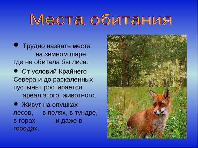 Трудно назвать места на земном шаре, где не обитала бы лиса. От условий Край...