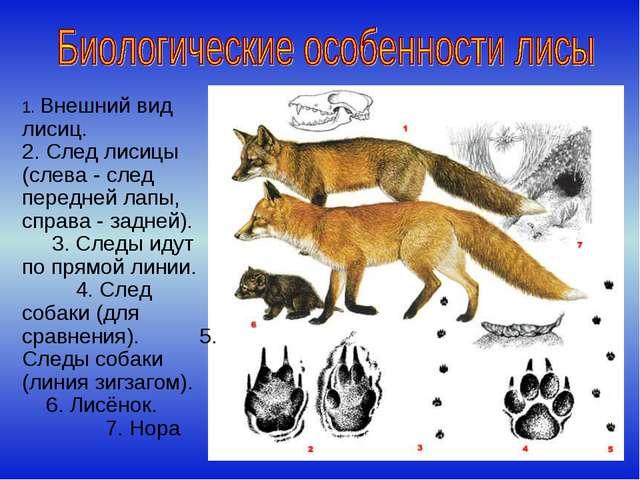 1. Внешний вид лисиц. 2. След лисицы (слева - след передней лапы, справа - за...