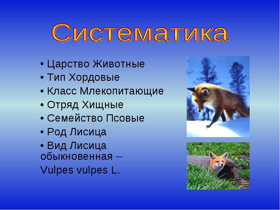 Царство Животные Тип Хордовые Класс Млекопитающие Отряд Хищные Семейство Псо...