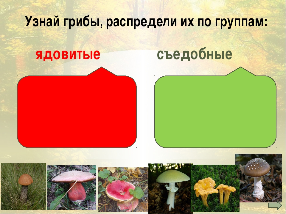 шляпка ножка грибница Определи части гриба