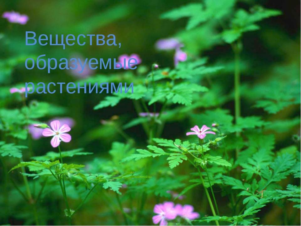 Вещества, образуемые растениями