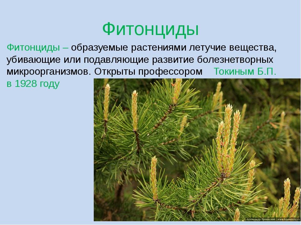 Фитонциды Фитонциды – образуемые растениями летучие вещества, убивающие или п...