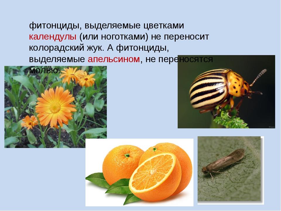 фитонциды, выделяемые цветками календулы (или ноготками) не переносит колорад...