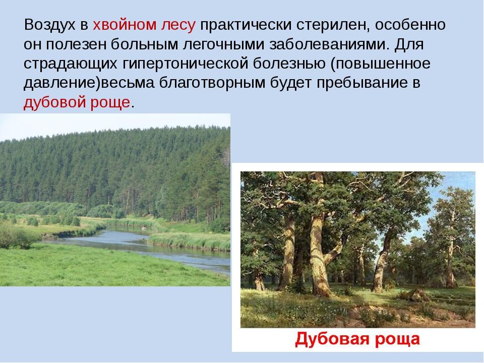 Воздух в хвойном лесу практически стерилен, особенно он полезен больным легоч...