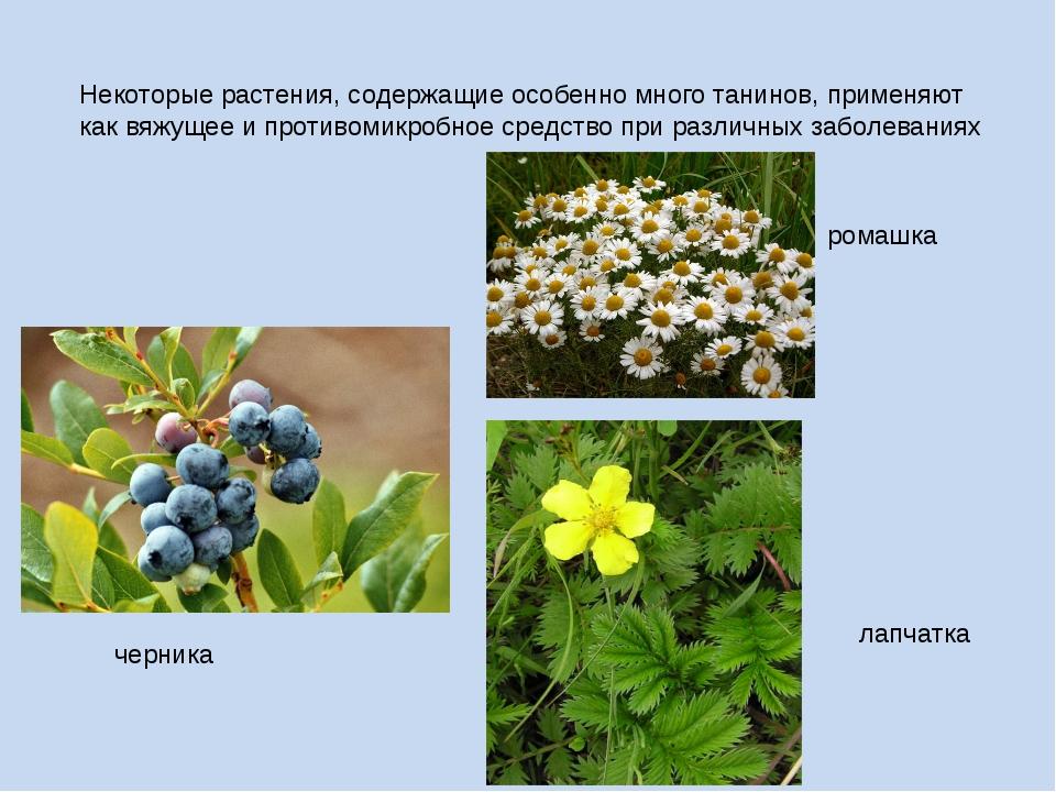 Некоторые растения, содержащие особенно много танинов, применяют как вяжущее...