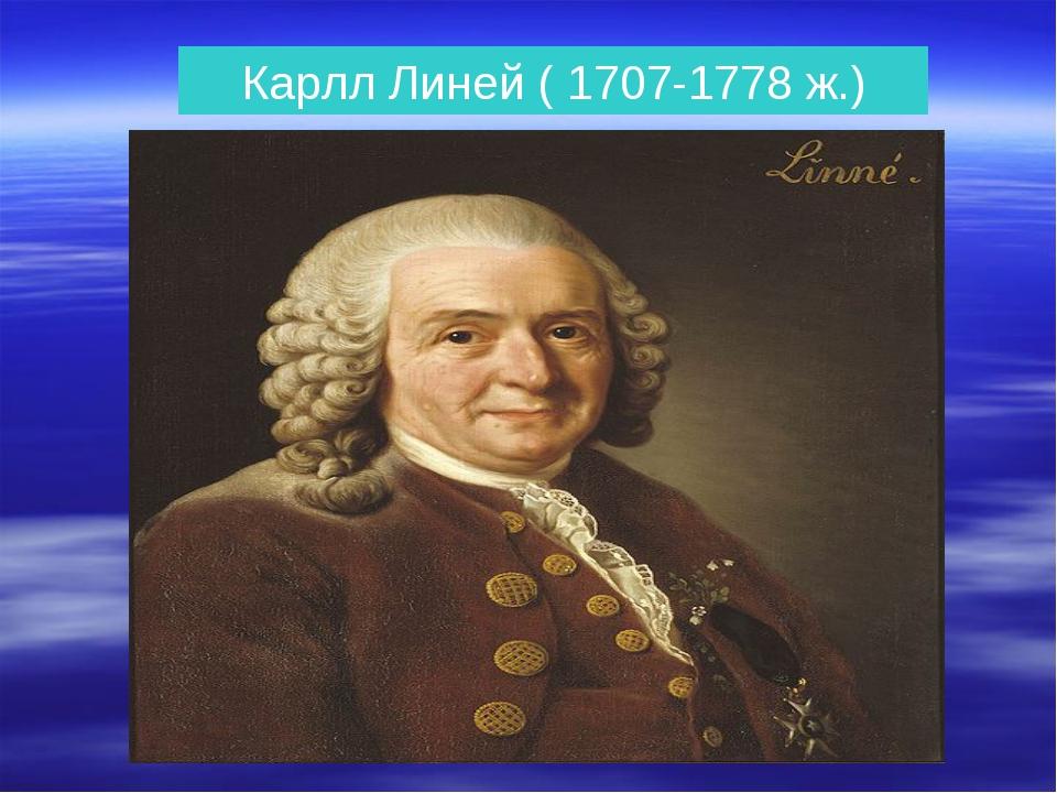 Карлл Линей ( 1707-1778 ж.)