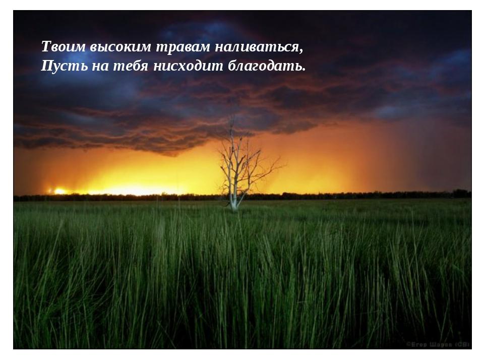 Твоим высоким травам наливаться, Пусть на тебя нисходит благодать.