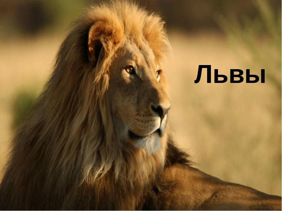 Животное на лев презентацию тему