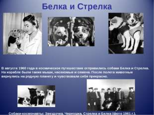 Белка и Стрелка В августе 1960 года в космическое путешествие отправились соб