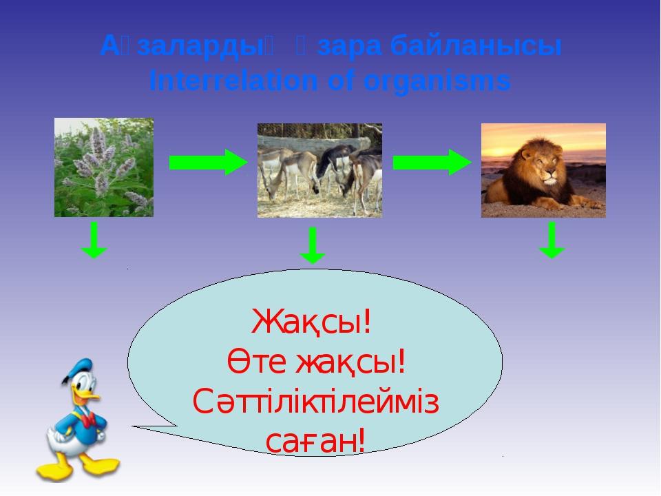 Ағзалардың өзара байланысы Interrelation of organisms Майда ағзалар Жақсы! Өт...