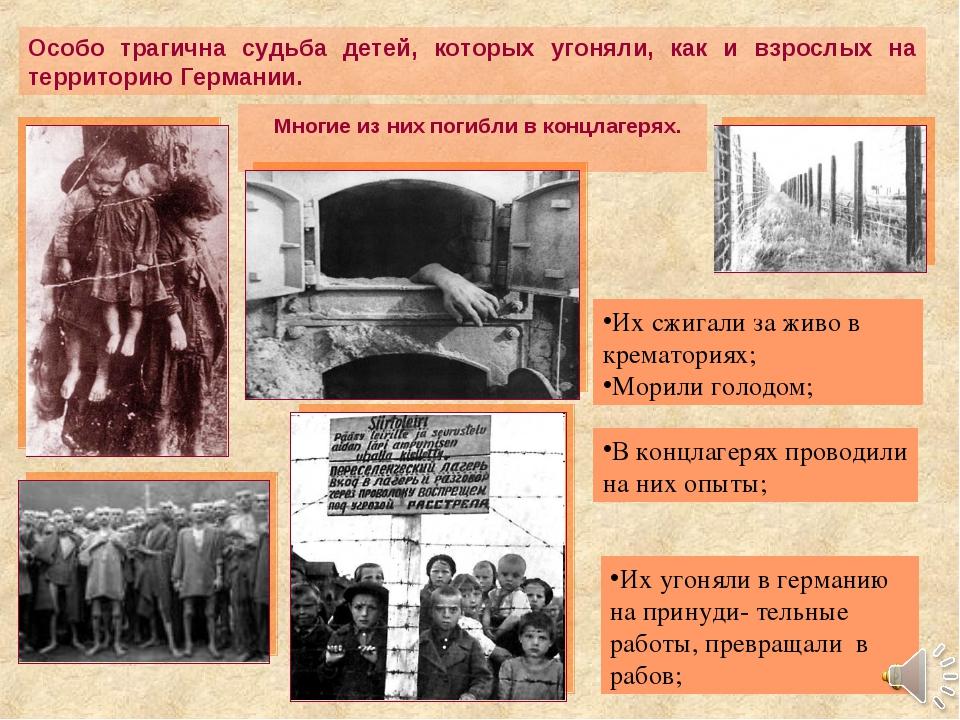 Многие из них погибли в концлагерях. Особо трагична судьба детей, которых уг...