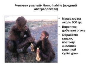 Человек умелый- Homo habilis (поздний австралопитек) Масса мозга около 650 гр