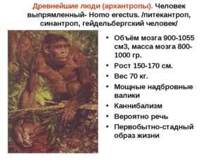 Древнейшие люди (архантропы). Человек выпрямленный- Homo erectus. /питекантро