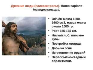 Древние люди (палеоантропы)- Homo sapiens /неандертальцы/. Объём мозга 1200-1