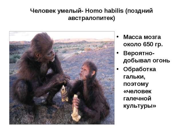 Человек умелый- Homo habilis (поздний австралопитек) Масса мозга около 650 гр...