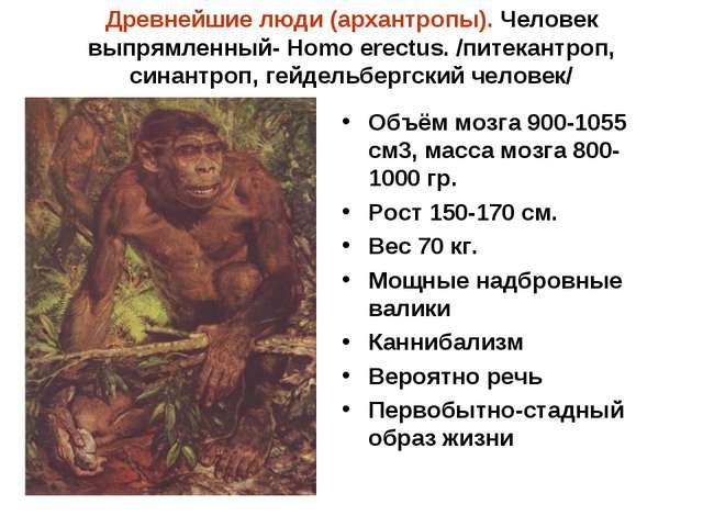 Древнейшие люди (архантропы). Человек выпрямленный- Homo erectus. /питекантро...