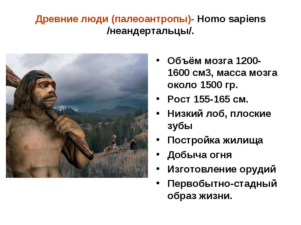 Древние люди (палеоантропы)- Homo sapiens /неандертальцы/. Объём мозга 1200-1...