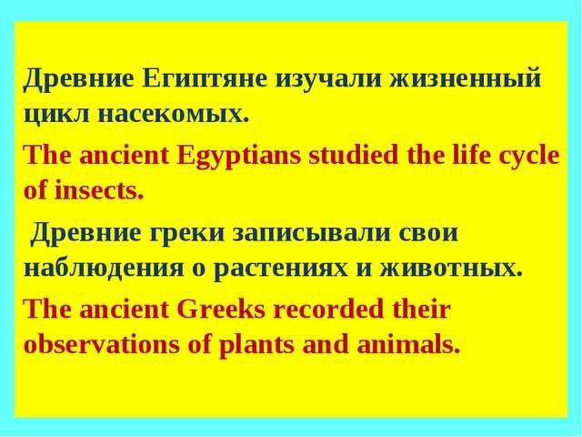 Древние Египтяне изучали жизненный цикл насекомых. The ancient Egyptians stu...