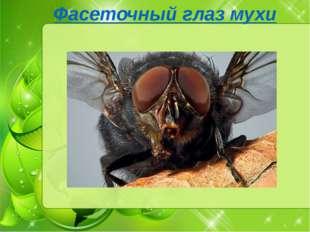 Фасеточный глаз мухи изучение фасеточных глаз мухи показало, что это насеком