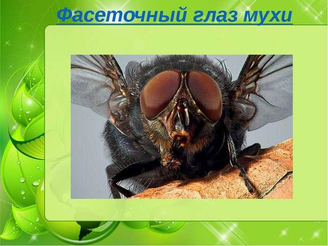 Фасеточный глаз мухи изучение фасеточных глаз мухи показало, что это насеком...
