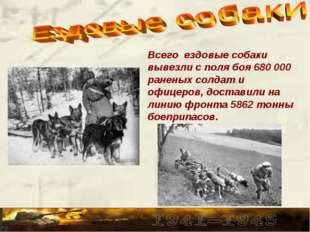 Всего ездовые собаки вывезли с поля боя 680 000 раненых солдат и офицеров, до
