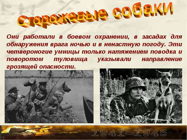 Они работали в боевом охранении, в засадах для обнаружения врага ночью и в не...