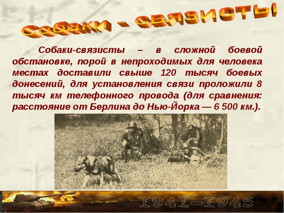 Собаки-связисты – в сложной боевой обстановке, порой в непроходимых для чело...