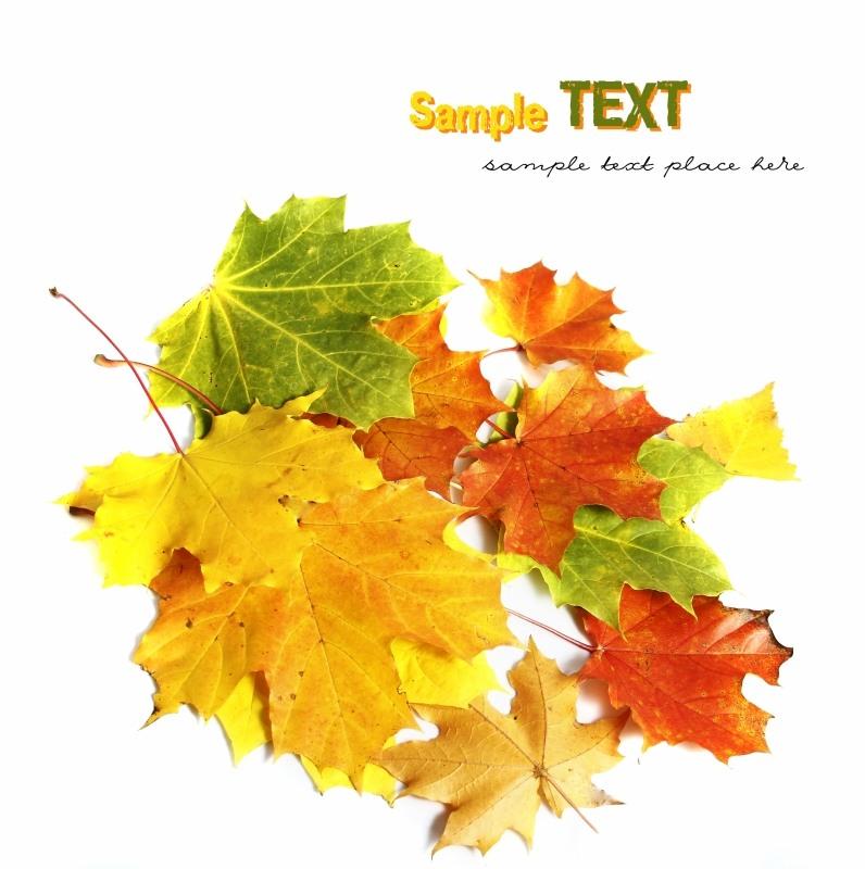 Осенние карточки Autumn leaves