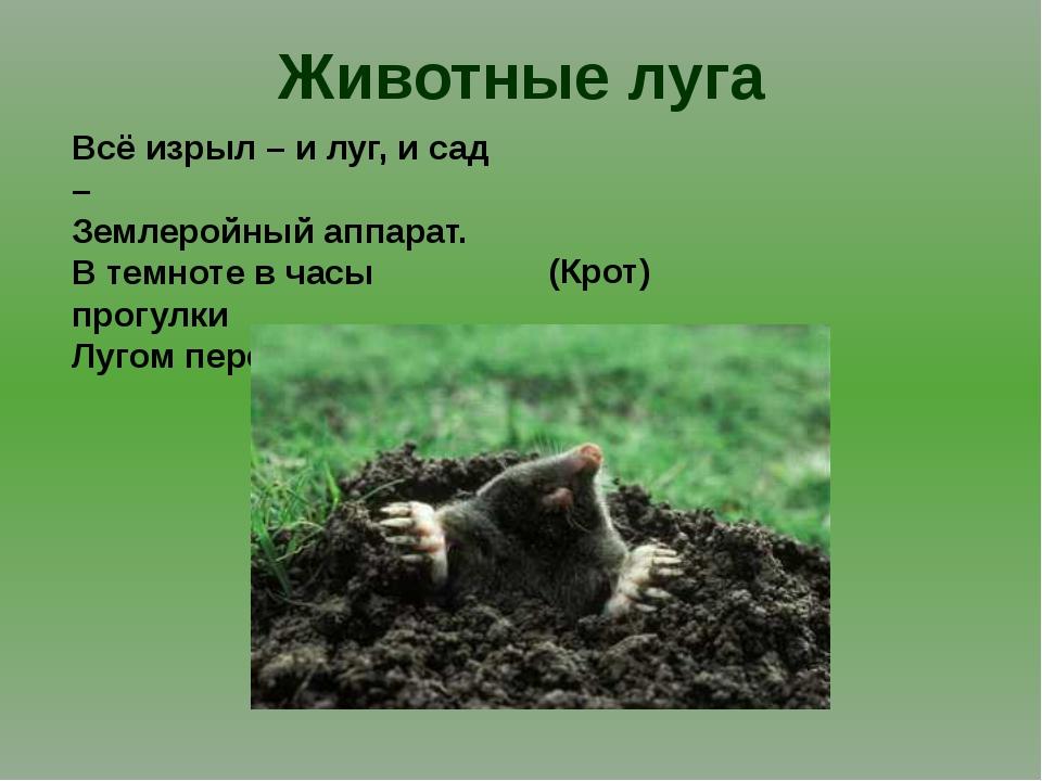 Животные луга Всё изрыл – и луг, и сад – Землеройный аппарат. В темноте в час...