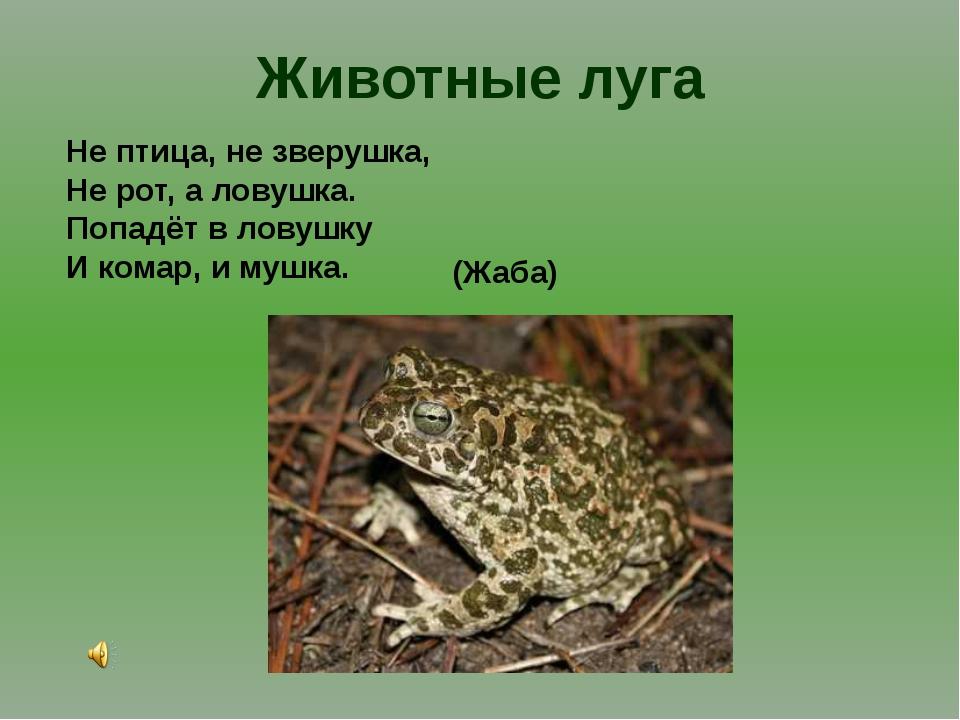 Животные луга Не птица, не зверушка, Не рот, а ловушка. Попадёт в ловушку И к...