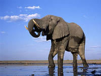 слон1.jpeg