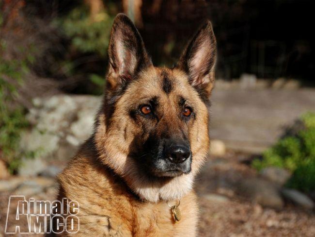скачать бесплатно картинки собак