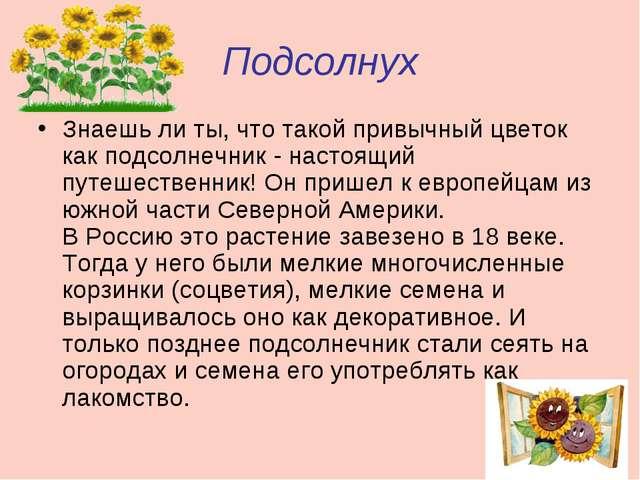 Презентация по окружающему миру на тему Растения  Подсолнух Знаешь ли ты что такой привычный цветок как подсолнечник настоящ