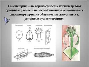 Симметрия, или соразмерность частей целого организма, имеет непосредственное