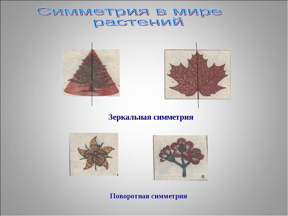 Зеркальная симметрия Поворотная симметрия
