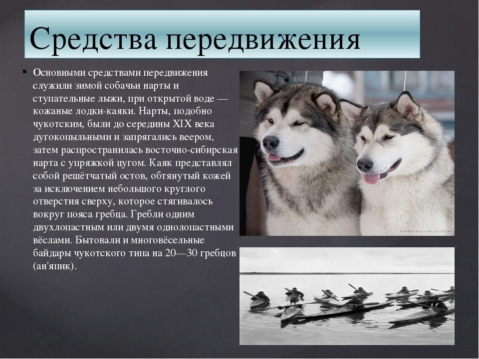 Средства передвижения Основными средствами передвижения служили зимой собачьи...