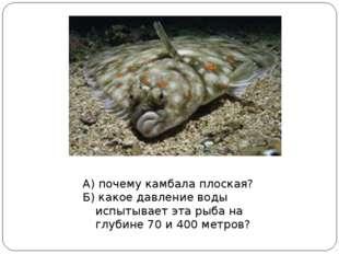 А) почему камбала плоская? Б) какое давление воды испытывает эта рыба на глуб