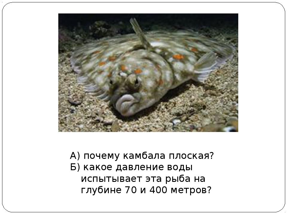 А) почему камбала плоская? Б) какое давление воды испытывает эта рыба на глуб...