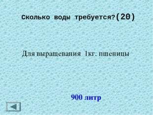 Сколько воды требуется?(20) 900 литр Для выращевания 1кг. пшеницы